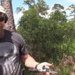Gorilla Ammo Hog Hunt Part 6