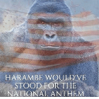harambe-would-ve-stood-for-the-national-anthem-20231082